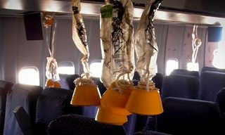 Photograph of oxygen masks descending in an aeroplane compartment